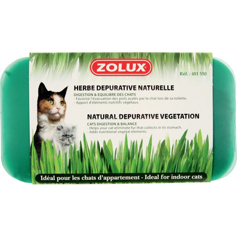 HERBE À CHAT DÉPURATIVE NATURELLE