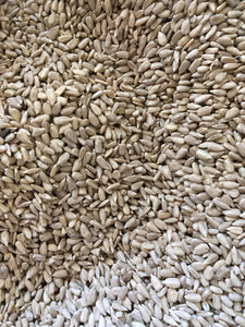 Organic Sunflower Seeds by the pound