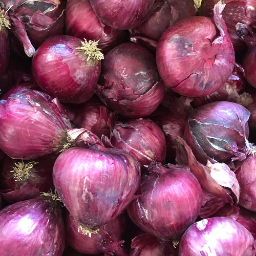 Organic Red Onion by the pound