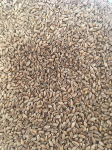 Organic Hard Red Spring Wheat Berries by the pound