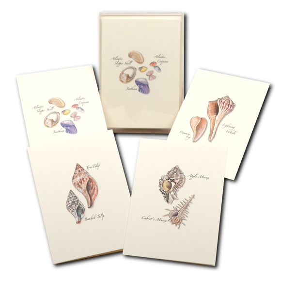ES&W Boxed Cards Seashell Assortment