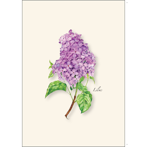 ES&W Boxed Cards Lilac