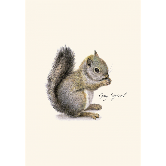 ES&W Boxed Cards Gray Squirrel