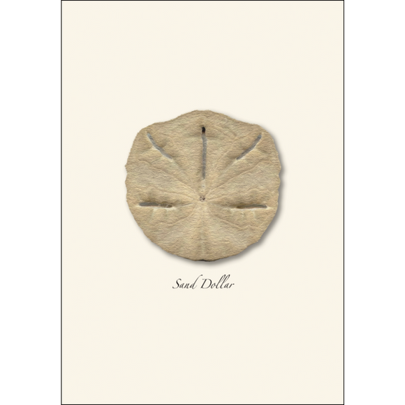 ES&W Boxed Cards Sand Dollar