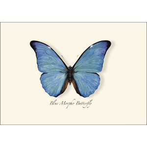 ES&W Boxed Cards Blue Morpho Butterfly