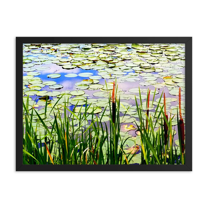 """Pond Lily"" Framed poster - College Collections Art"