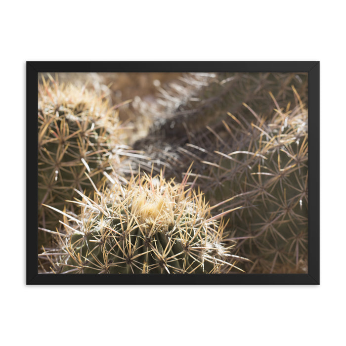 """Pointy"" Framed poster - College Collections Art"
