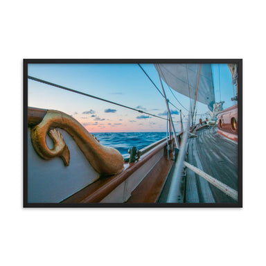 """Dolphin 1"" Framed Print - College Collections Art"