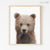 Baby Grizzly Bear Cub Shipped Print