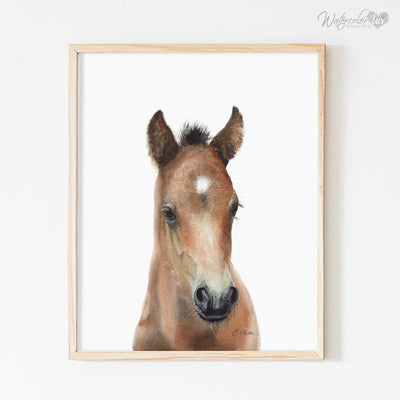 Baby Horse Shipped Print