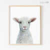 Baby Sheep Shipped Print