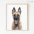 Belgian Malinois Puppy Digital Print