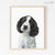 Black & White English Springer Spaniel Puppy Shipped Print