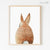 Bunny Rabbit Tail Digital Print