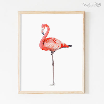 Pink Flamingo White Background Shipped Print