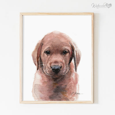 Fox Red Labrador Retriever Puppy Shipped Print