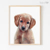Golden Retriever Puppy Shipped Print
