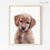 Golden Retriever Puppy Digital Print