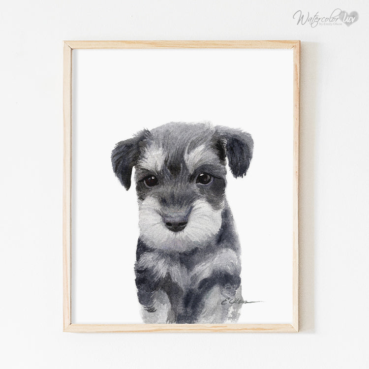Miniature Schnauzer Puppy Digital Print