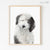 Old English Sheepdog Puppy Digital Print
