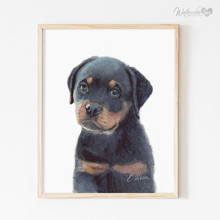 Rottweiler Puppy Digital Print