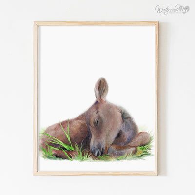 Sleeping Baby Moose Calf Shipped Print