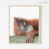 Sleeping Orangutan Shipped Print
