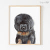 Tibetan Mastiff Puppy Digital Print