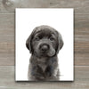 Black Labrador Retriever Puppy 2 Shipped Print