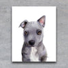 Grey Mixed Breed Puppy Shipped Print