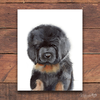 Tibetan Mastiff Puppy Shipped Print
