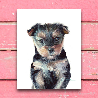 Yorkshire Terrier Puppy Shipped Print