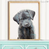Black Labrador Retriever Puppy Shipped Print