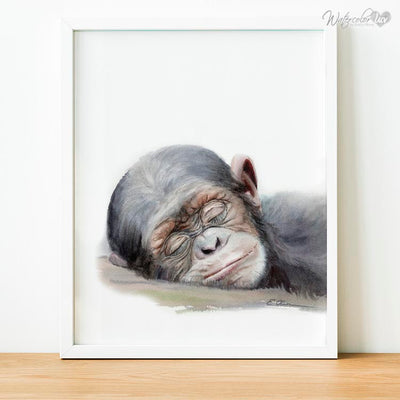 Sleeping Baby Chimpanzee Shipped Print