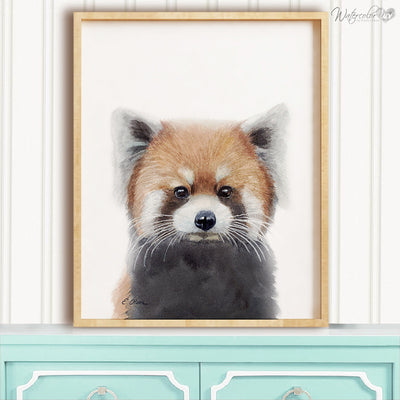 Baby Red Panda Digital Print