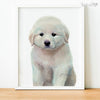 Great Pyrenees Puppy Shipped Print
