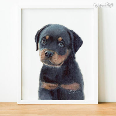 Rottweiler Puppy Shipped Print