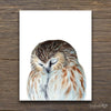 Sleeping Owl Shipped Print