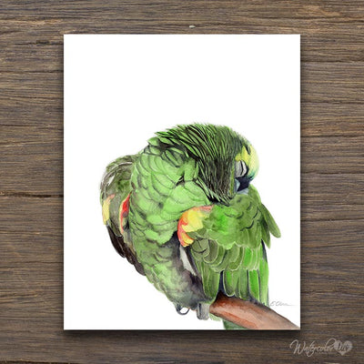 Sleeping Jungle Parrot Shipped Print