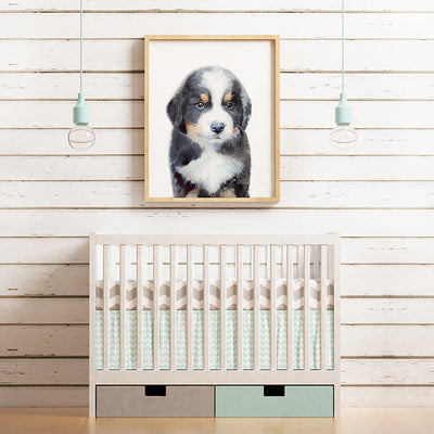 Bernese Mountain Dog Puppy Shipped Print