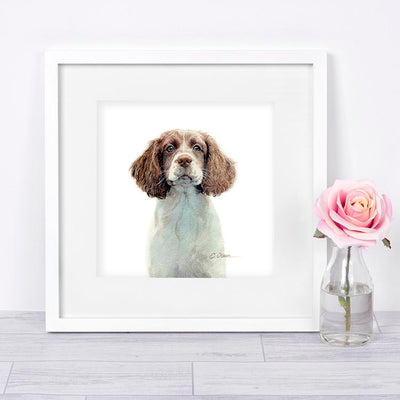 English Springer Spaniel Puppy Shipped Print