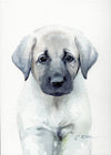 Anatolian Puppy Original Watercolor Painting