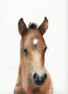 Brown Arabian Foal Original Watercolor Painting