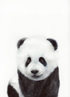 Baby Panda Portrait Original Watercolor Painting
