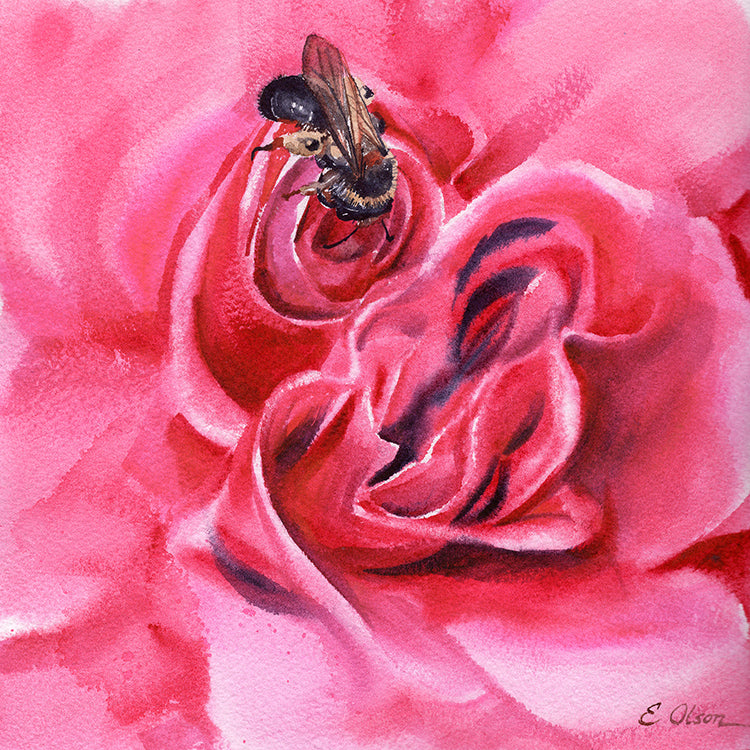 Bee in a Pink Rose Original Watercolor Painting