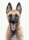 Belgian Malinois Puppy Original Watercolor Painting