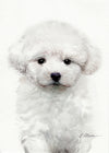 Bichon Frise Puppy Original Watercolor Painting