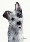 Blue Heeler Puppy Original Watercolor Painting