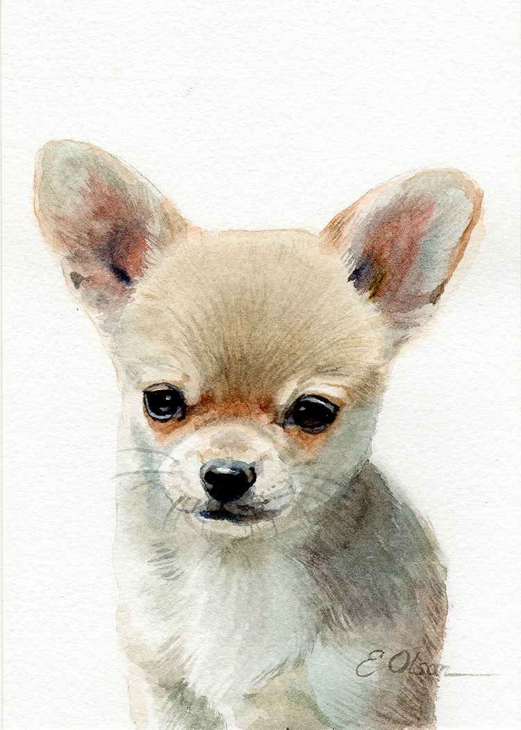 Chihuahua Puppy Original Watercolor Painting