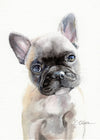 French Bulldog Puppy Original Watercolor Painting